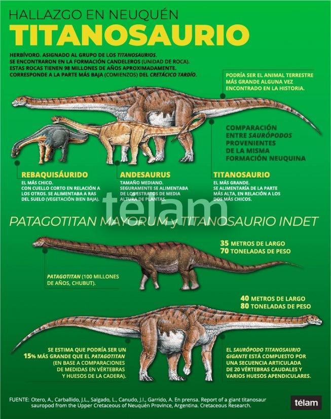 Encontraron restos fósiles de un dinosaurio en Neuquén que podría ser el más grande de la historia